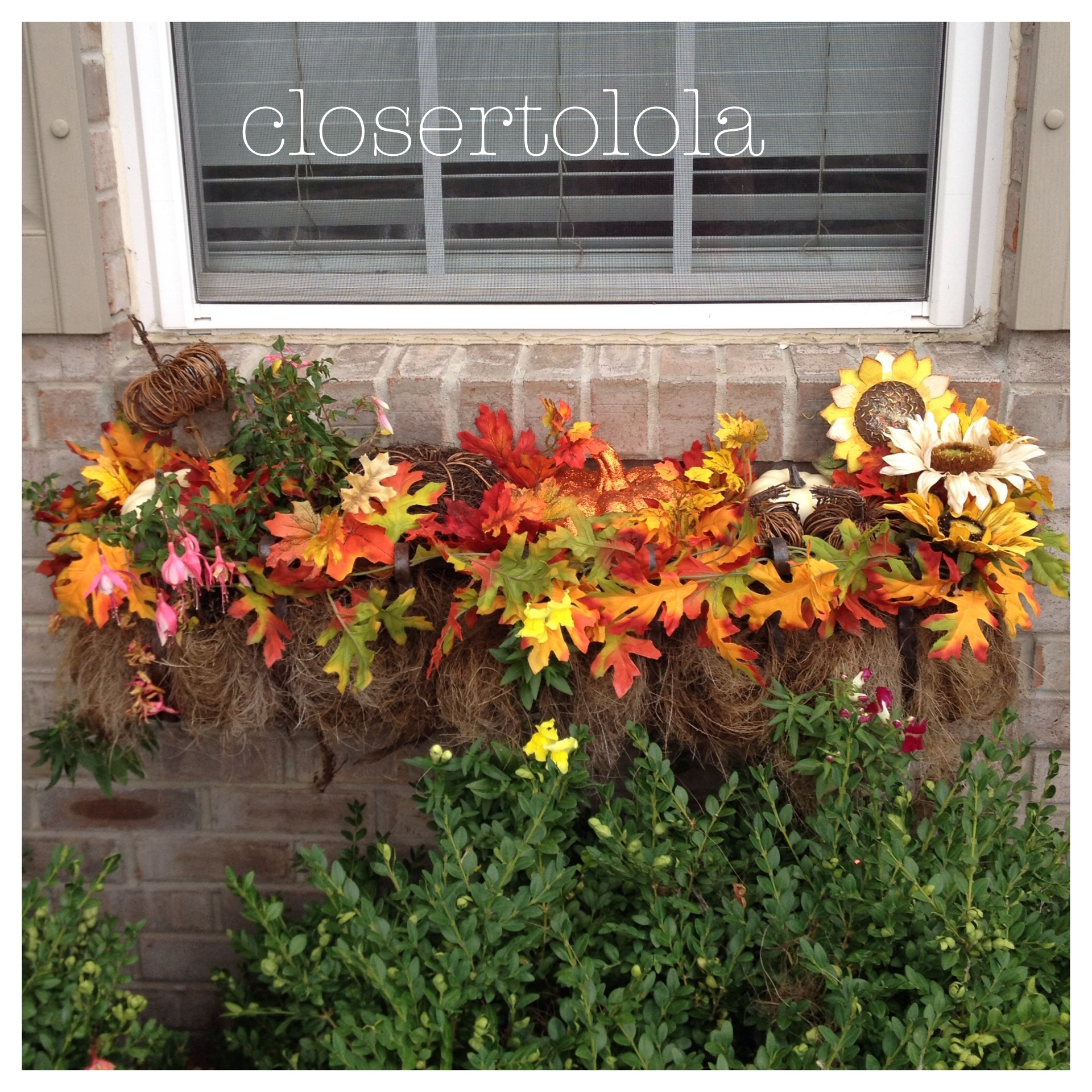 Fall Window Box: Adventures In Decorating: Fall 2014 Window Boxes (First